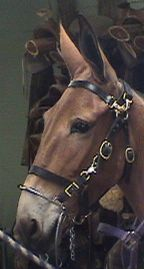 Amish Tack - Horse Supplies - Horse Products from the Missouri ...
