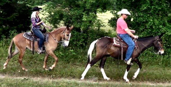 Learn about mules